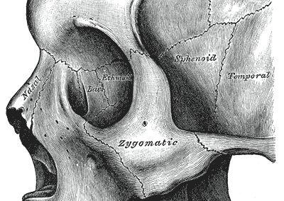 Human nasal bones