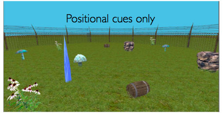 Positional cues only